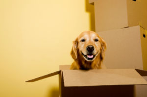 Reach out to friends and family to watch children and pets during your move to save money.