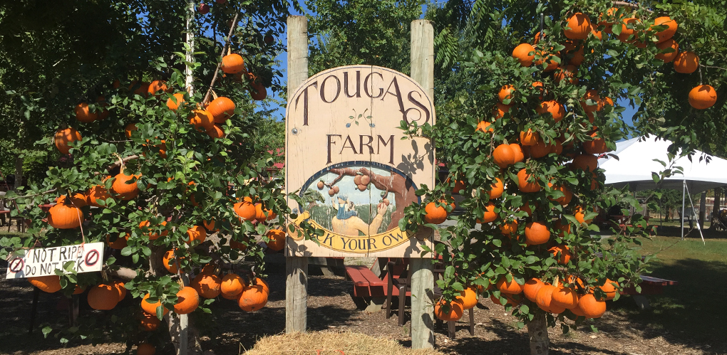 Tougas Farm Sign - Pumpkin Patch Massachusetts